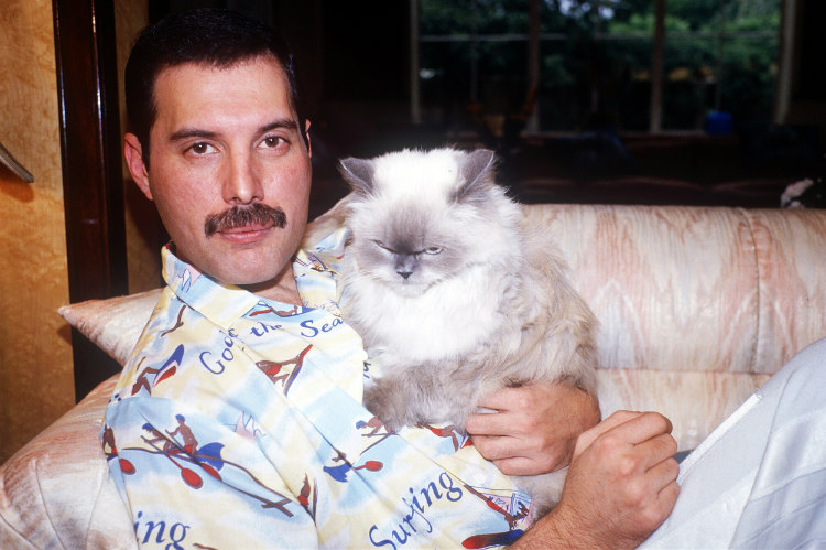 Freddie Mercury and His Cat
