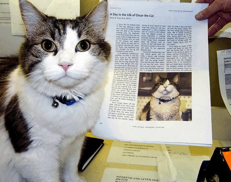 Oscar, the cat