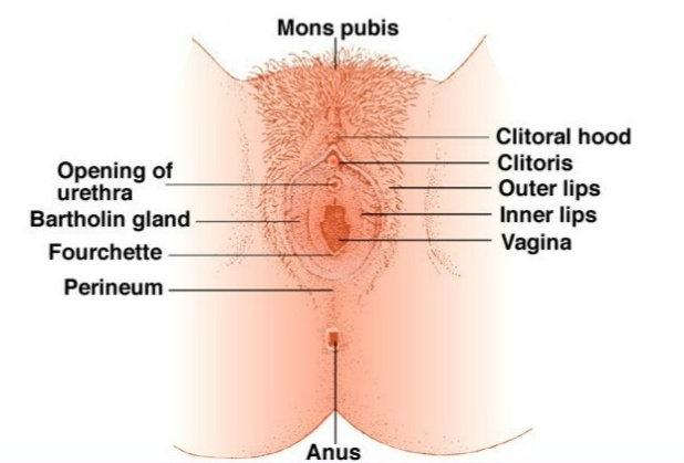 holes Woman s penis