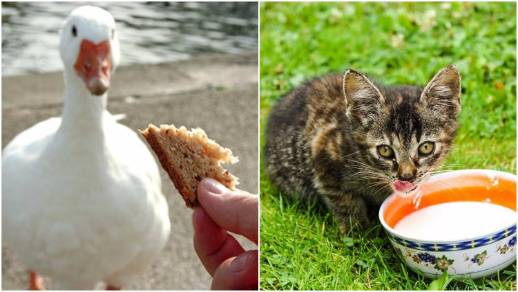 Ducks and cats