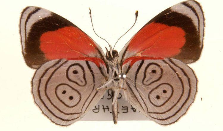 8998 Butterfly