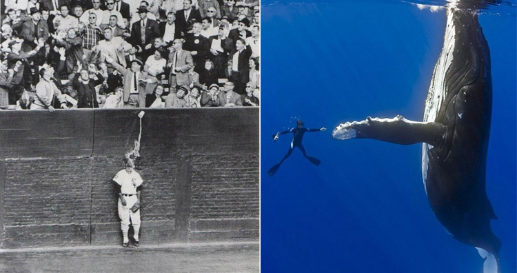 Perfectly Timed Photographs