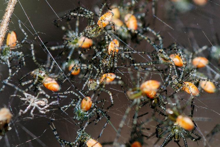 Spider Population