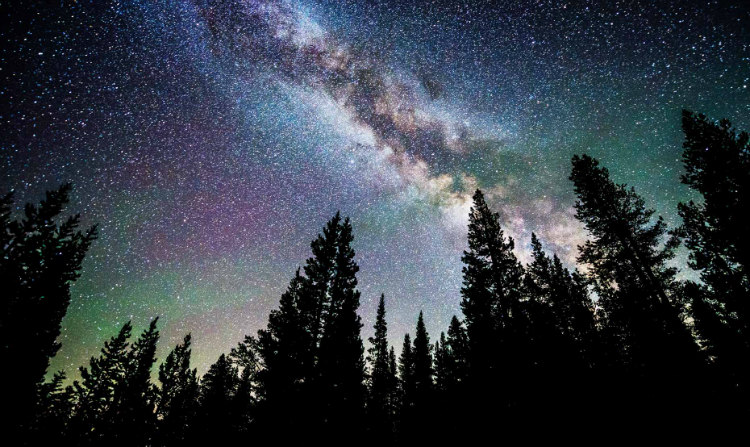 Trees and Milky Way