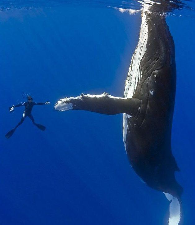 Whale Hi-Fives
