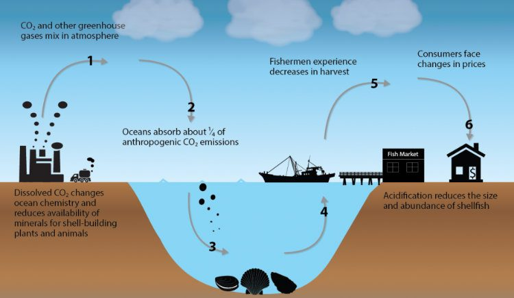 Future Events That Can Wipe Out Humanity : Ocean Acidification
