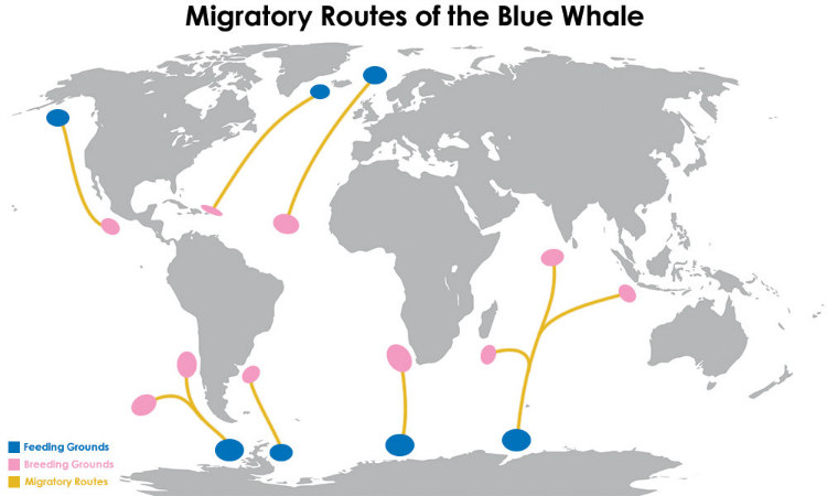 10 Facts About Blue Whales That Will Leave You Speechless