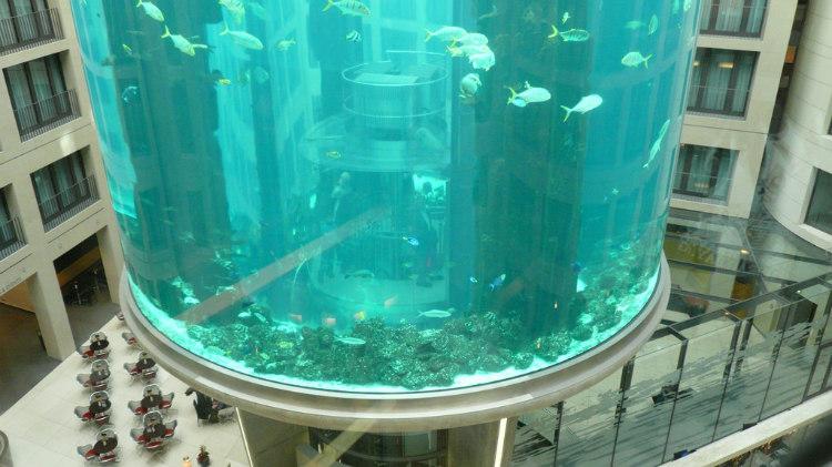 Closer Look at AquaDom