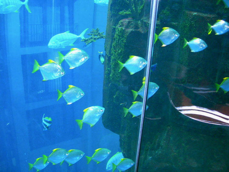 Fish in AquaDom