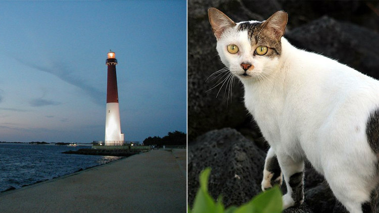 Lighthouse and Feral Cats