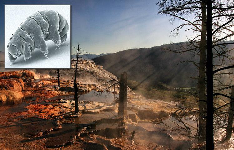 Tardigrades in Hot Springs