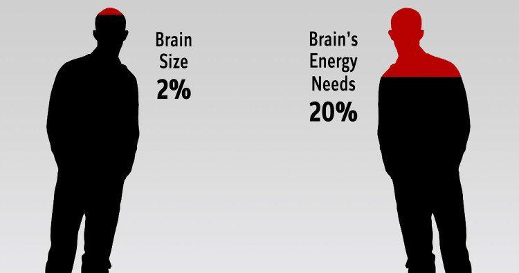 Brain's Energy Consumption