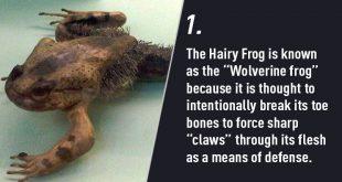 Craziest Ways Animals Protect Themselves