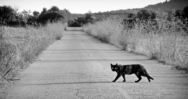 Black cat crossing road