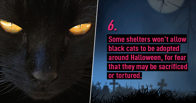 10 Freaky Facts about Halloween You Probably Don't Know