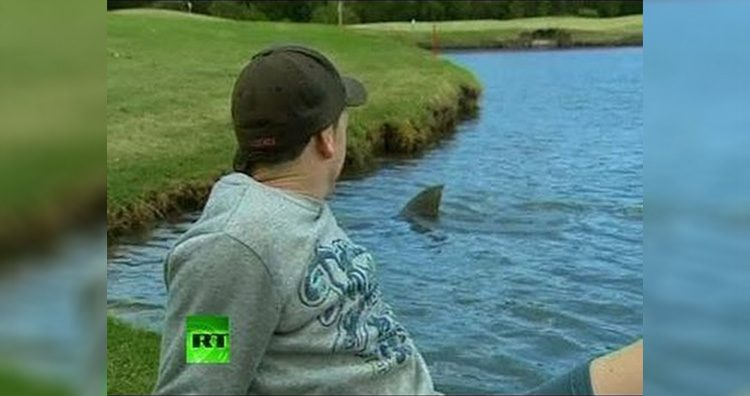 Bull Shark in Golf Course