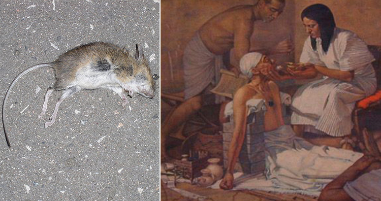 Dead mouse, Medicine in ancient Egypt