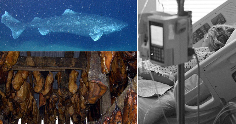 Greenland shark, Hákarl and Sick lady in hospital