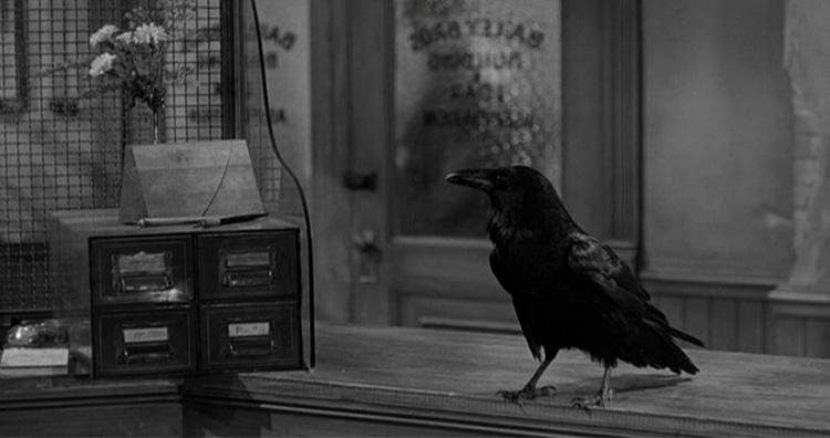 Jimmy the raven