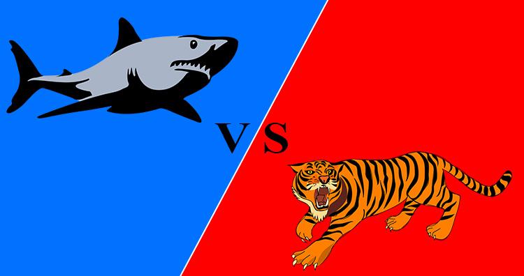 Shark V/s Tiger