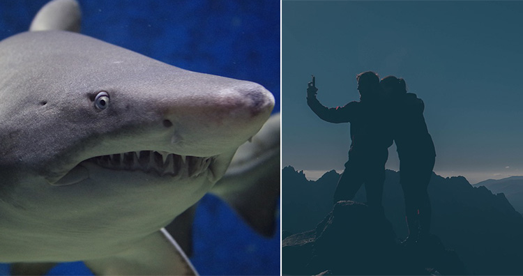 Shark and taking Selfie