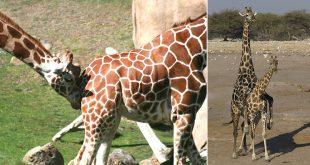 animal mating habits