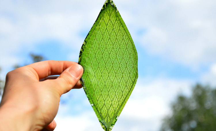 Melchiorri Silk Leaf