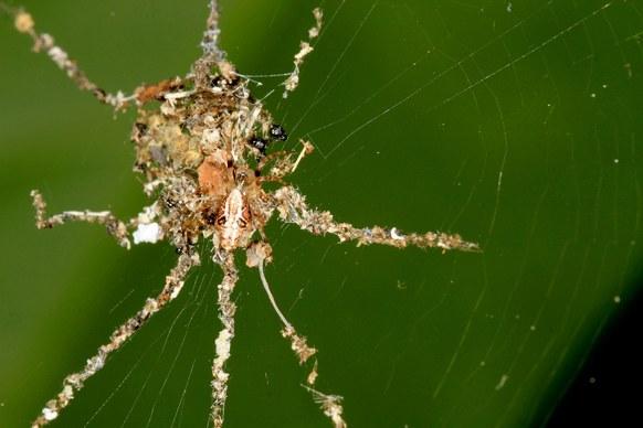 Spider Decoys