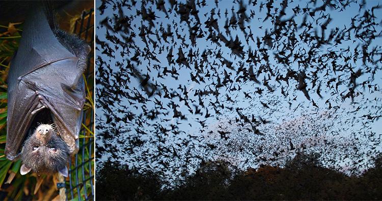 Bat, bats exiting Bracken Bat Cave