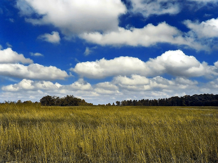 Cumulus Cloud Weight