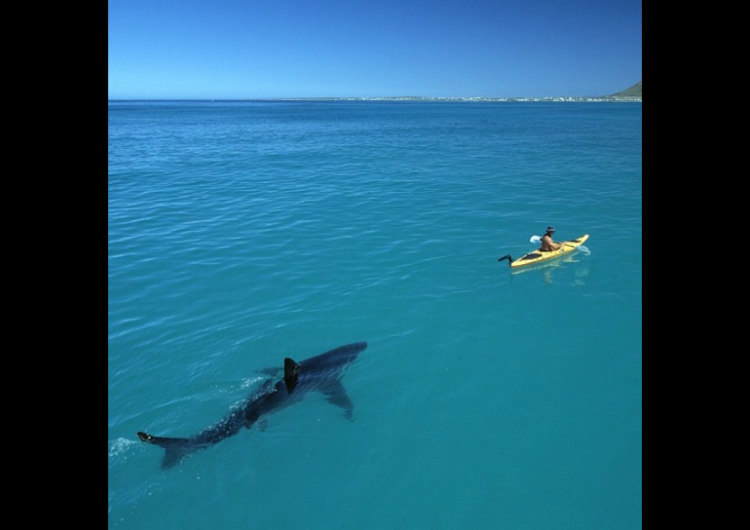 Original Shark Photo on Thomas Peschak's Instagram