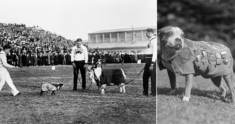 Sergeant Stubby as mascot for the Georgetown Hoyas, Sergeant Stubby