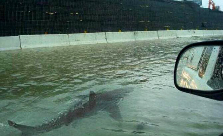 Shark on Highway After Hurrican Irma