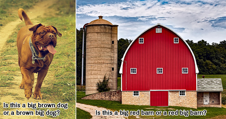 big brown dog, big red barn