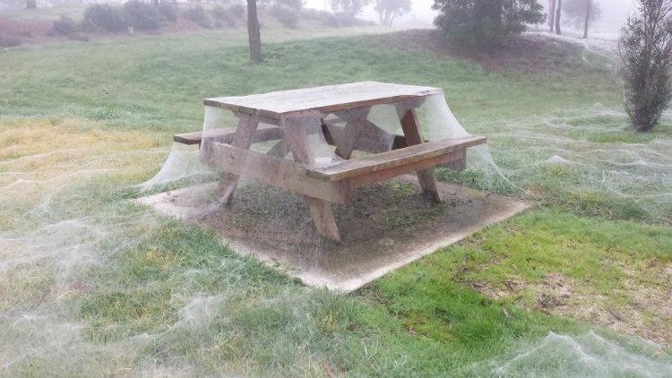 Spiderweb Covered Park in Yinnar, Australia