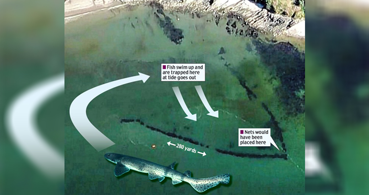 The giant fish trap, built during the Norman Conquest and designed to trap fish behind rock walls, was spotted on Google Earth