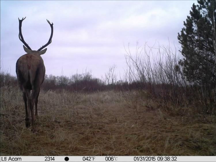 Wildlife Photographs Captured by Chernobyl Trap Camera