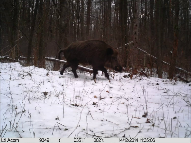 Wildlife Photographs Captured by Chernobyl Trap Camera