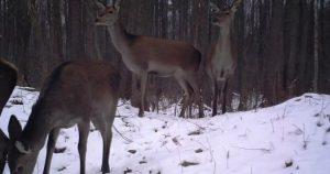 Wildlife of Chernobyl