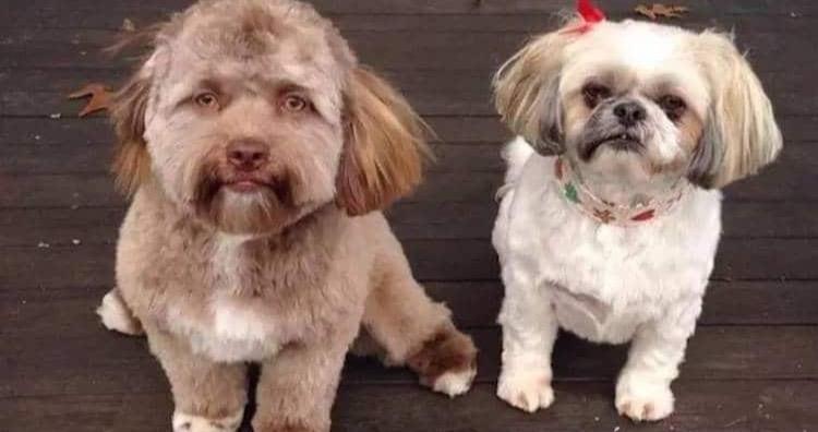 Yogi and Daria