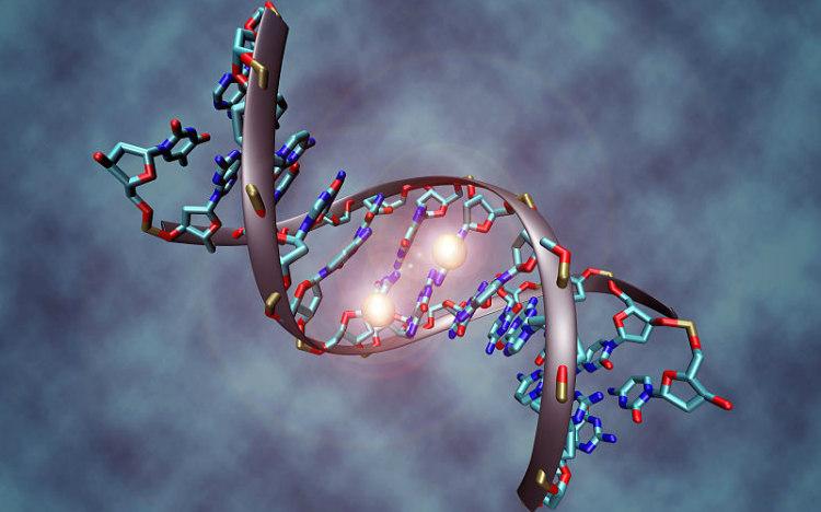 Epigenetics, DNA Methylation