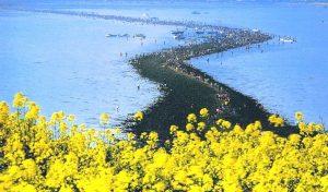Jindo Sea Parting