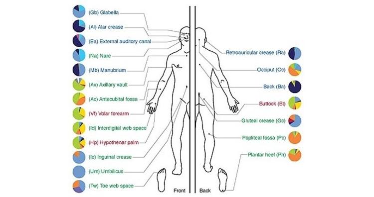 Microbes on human body