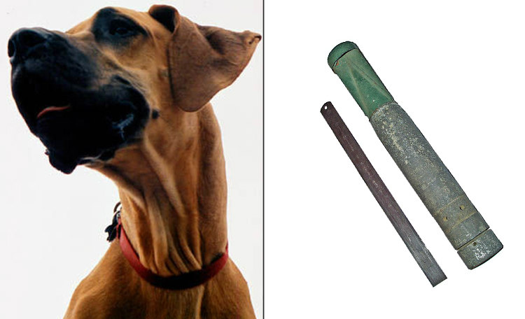 A Great Dane and an Incendiary Bomb