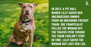 Animals Saved Human Lives