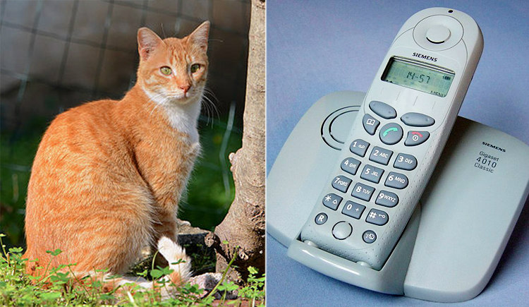 Ginger Cat and Telephone