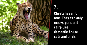 Unbelievable Facts that Sound Completely Fake