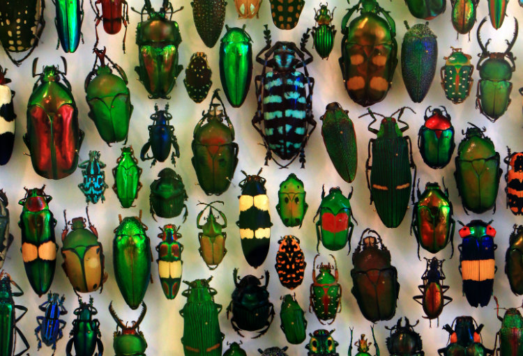 Coleoptera at the Staatliches Museum für Naturkunde Karlsruhe, Germany