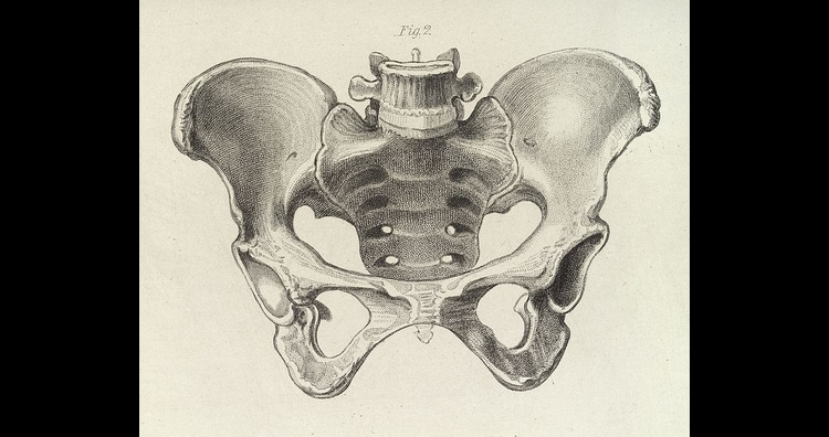 Diagram of the female pelvis