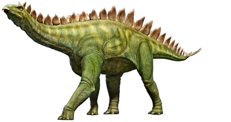 Stegosaurus had tiny brain